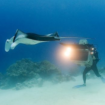 3D camera control testing by diver photographing hammerhead shark